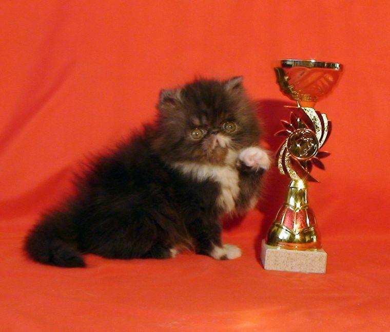 где купить персидского котенка в москве социальной справедливости: